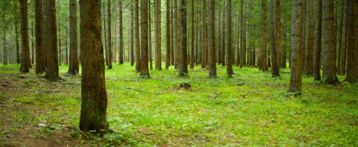 Come si può proteggere la foresta